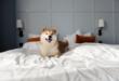 Husdjur på hotellrum